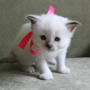 Cute kittens looking for a