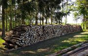 Brennholz Kiefer Fichte dünnes mittleres