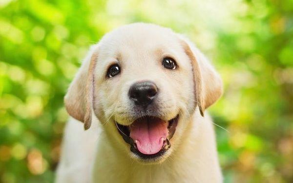 Haustierbetreuung Tierbetreuung Hundebetreuung Katzenbetreuung Petsitting