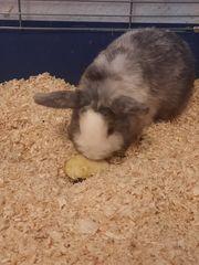 Kaninchen sucht dringend neues zuhause