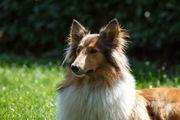 Hundebetreuung Nürnberg im Gassi-Service von
