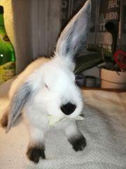 2 junge Kaninchen m 12