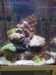 Meerwasseraquarium Auflösung