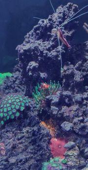 Meerwasser Aquarium 250l
