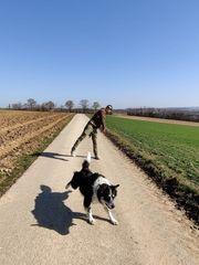 Hunde Auslastung Betreuung