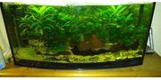 Aquarium 160 Liter mit gewölbter