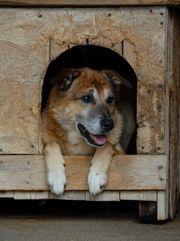 Buny - 9 Jahre Tierheim Wann