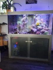 Meerwasser Aquarium komplett Korallen Anemonen