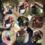 Ratten 14 02 21 geboren