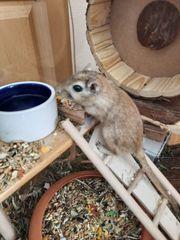 Renn Maus Mäuse Babys 6-9