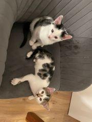 Zwei Kitten suchen liebevolles Zuhause