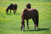 Pferdeboxen - Paddockboxen in Vollpension frei