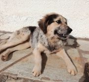 Kiki wuscheliges Hundemädchen ca 2