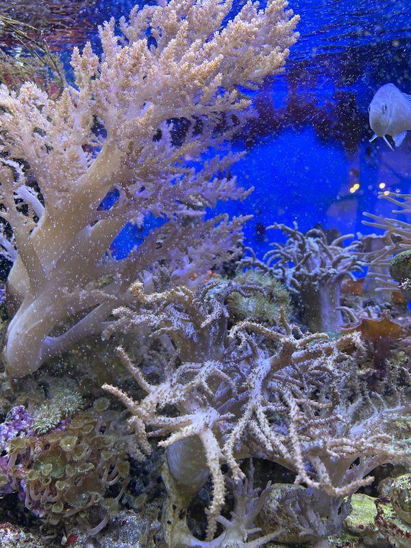 Korallen verkaufen oder tauschen- einfach