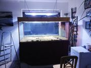 Meerwasser Aquarium und Technik