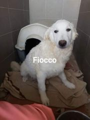 Fiocco-einer von drei Buben