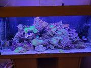 meerwasser Aquarium komplett zu verkaufen