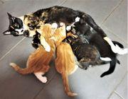 Hauskatzenbabies suchen ein liebenvolles Zuhause