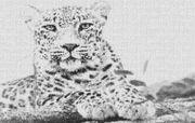 Vorlage für Ministeck Leopard 80x60cm