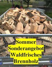 Buchen Brennholz Wald frisch