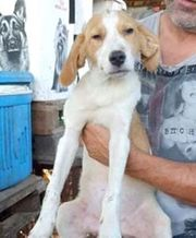 JORDAN - entzückendes Hundekind - sucht ein