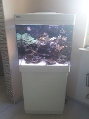 Meerwasser Aquarium Red See 130