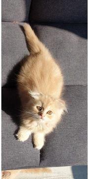 Blh Kitten abholbereit
