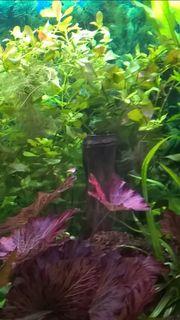 Suche Aquarium-Pflanzen