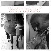 Mobile Soleinhalation für Pferde mit