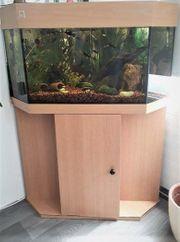 Eck Aquarium Holz