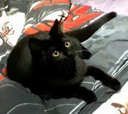 Katzenlaufrad GESUCHT - Laufrad Katze