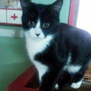 Kätzchen Sheela sucht Dich zum