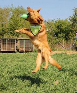 VALENTINO - sensibel sportlich nur für: Kleinanzeigen aus Rabenau - Rubrik Hunde