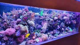 Bild 4 - Meerwasser korallen - Ötzingen Sainerholz