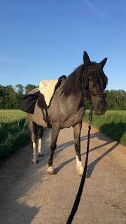 Suche Reitbeteiligung für Pony