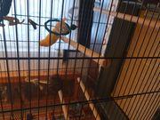 Kanarienvogel mit Käfig