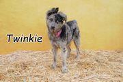 Helfen Sie Twinkie zu ihrem