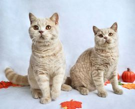 Katzen Kaufen Krefeld