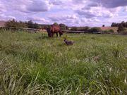 Sommerquartier für 2-3 Ponys