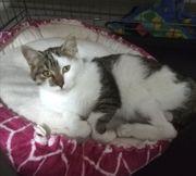 Luna Katze aus dem Tierschutz
