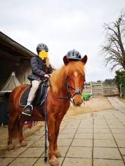 suche Reitbeteiligung an Pony