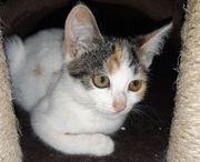 Baby Katze Sina 14 Wochen