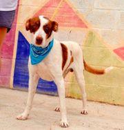 PLEBIO - Toller Familienhund sucht seine