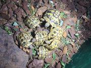 Griechische Landschildkröten und Deutsche Sumpfschildkröten