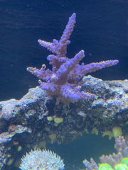 diverse Korallen ab 5 Euro