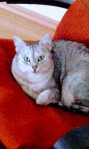 Erfahrene Tierbetreuung und Tierpflege für