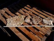 Riffplatte Lebentgestein Koralle Meerwasser