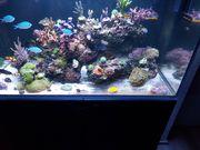 Verschidene Korallen ableger