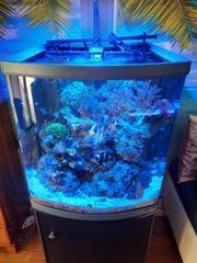 Meerwasseraquarium Sera Marin 130 l