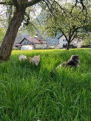 KatzensitterIn gesucht